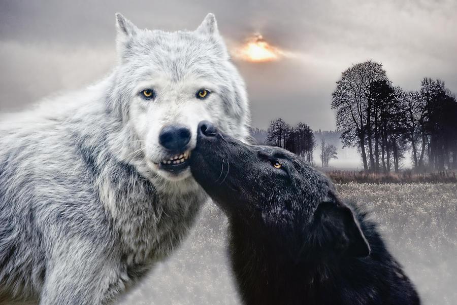 Kissing Wolves Photograph