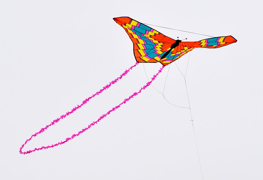 Kite With Pink Tail Photograph by Michael Bruce