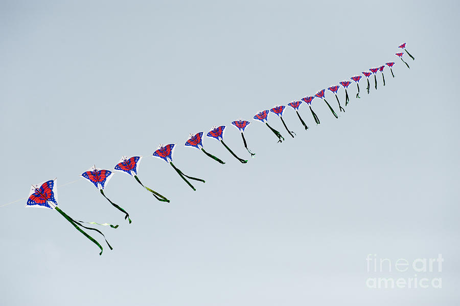 Asia Photograph - Kites In China by John Shaw