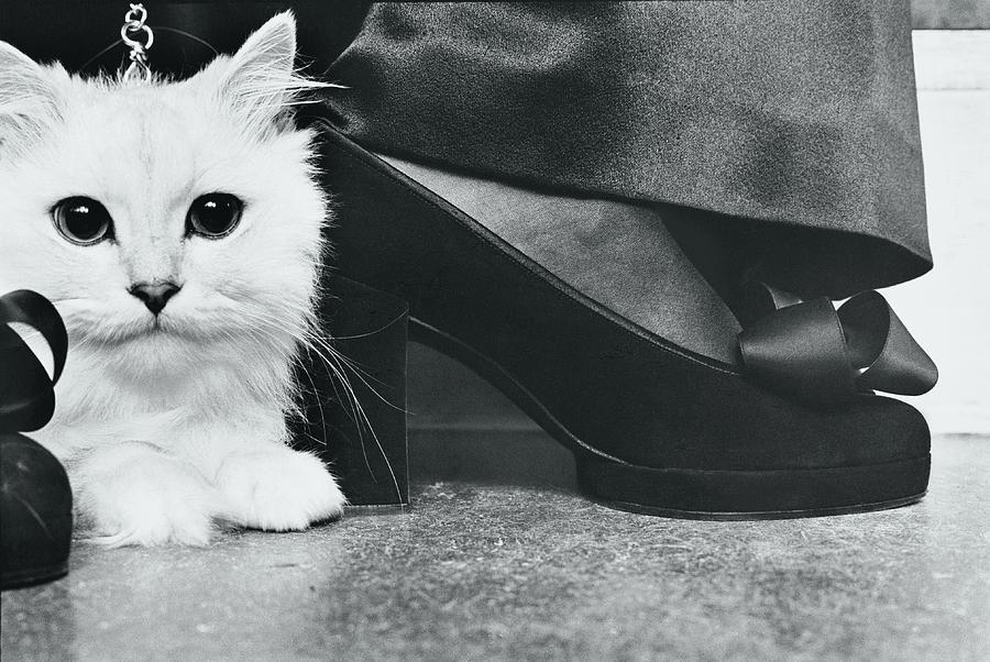 Kitten By Charles Jourdan Pumps Photograph by Kourken Pakchanian