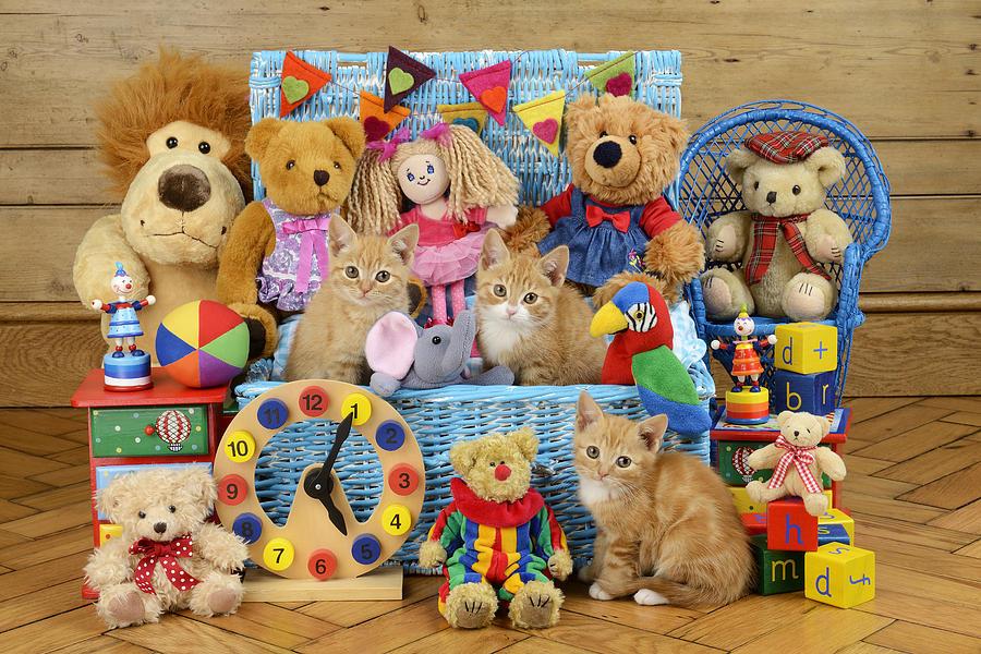 Cat Digital Art - Kitten Dress Box Ck526 by Greg Cuddiford