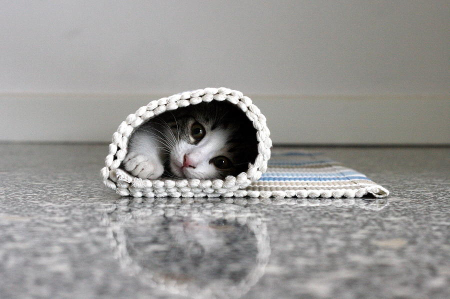 Kitten Hidden In Rolled Up Carpet Photograph by Nicopiotto