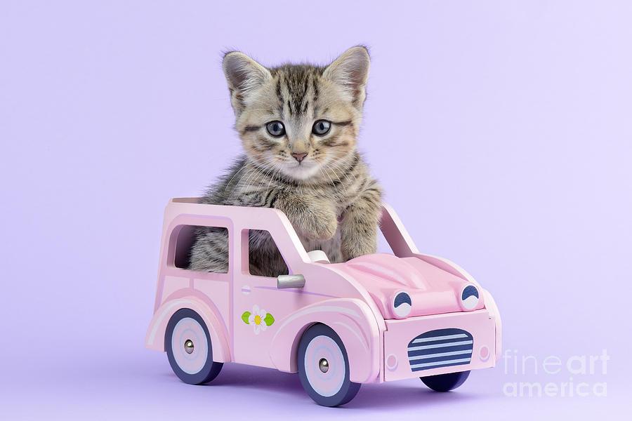 Tabbies Digital Art - Kitten In Pink Car  by Greg Cuddiford
