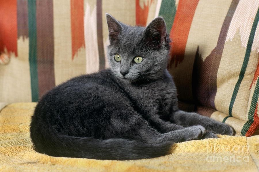Kitten Photograph - Kitten by James L. Amos
