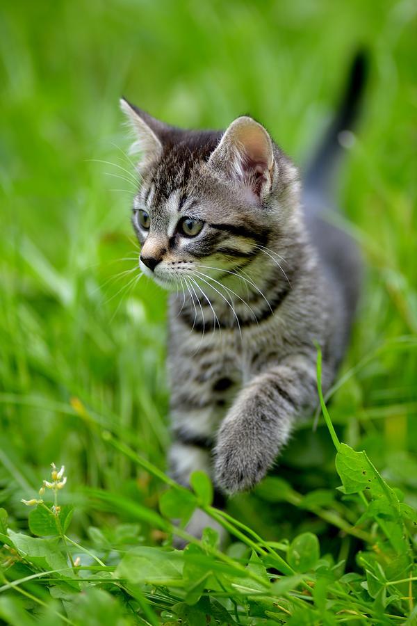 Little Cat Photograph - Kitten by Patrick Pestre