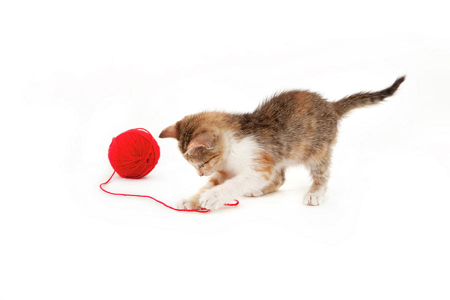 Kitten Playing With A Ball Of Red Wool Photograph by By Kerstin Claudia