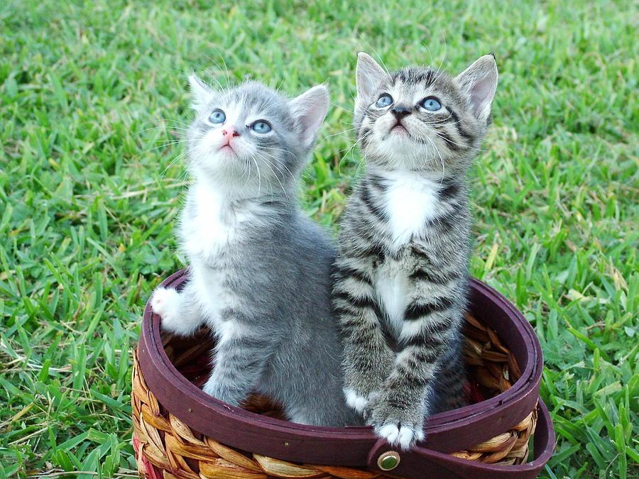 Kitten Photograph - Kittens by Pavlo Kuzyk
