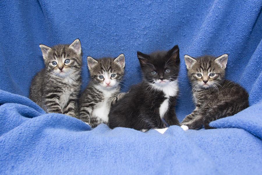 Kittens Sitting On Blanket Photograph by Duncan Usher