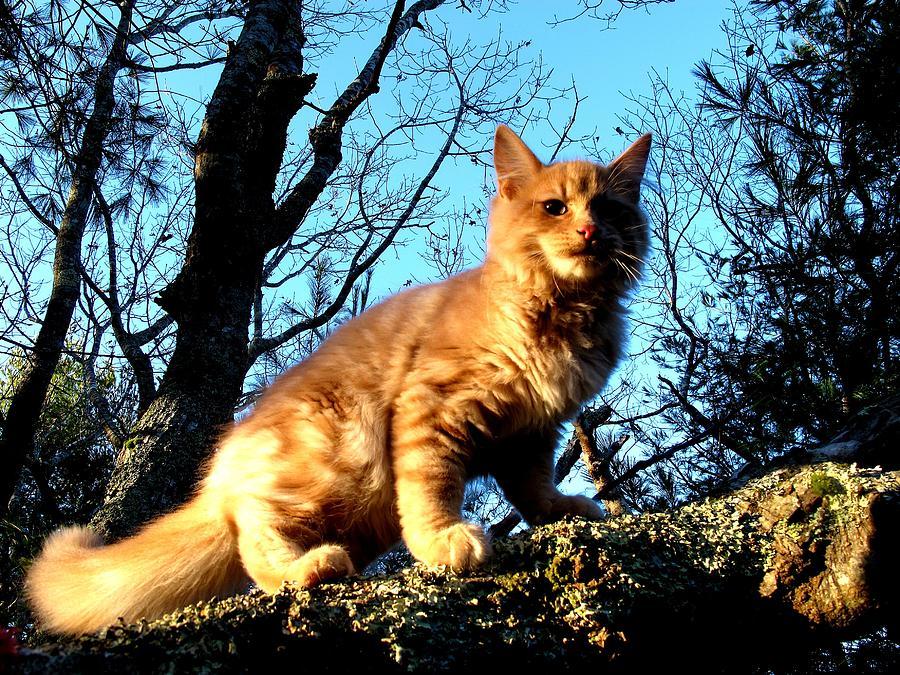 Kittery Cat Photograph