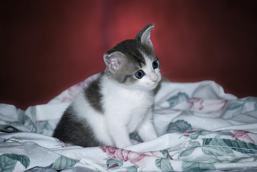 Animals Photograph - Kitty Taking A Moment To Chill by Thomas Woolworth
