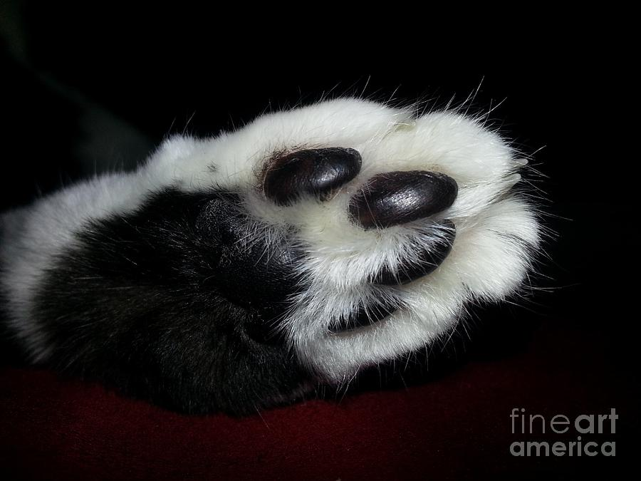 Cat Photograph - Kitty Toe Beans by Heather L Wright