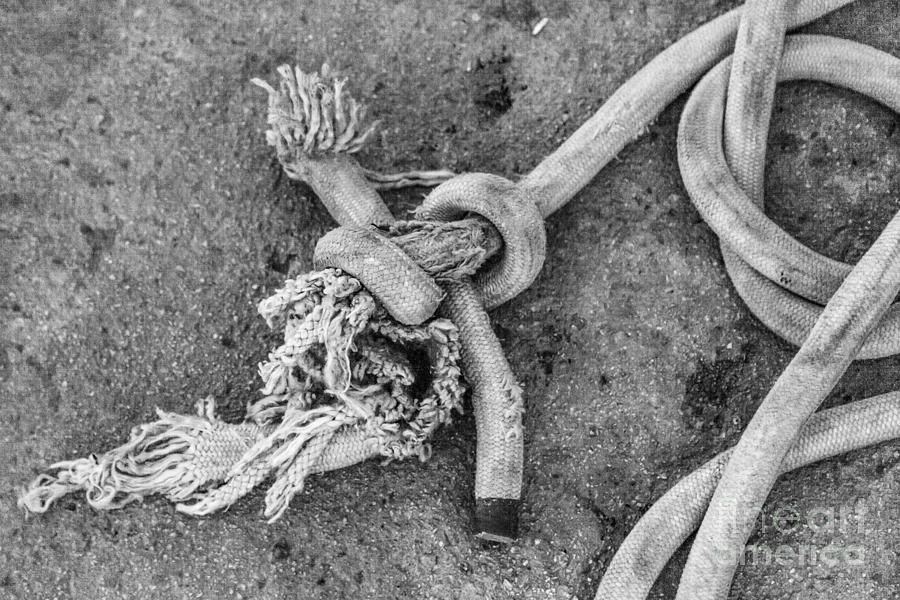 Knot Photograph by Eugenio Moya