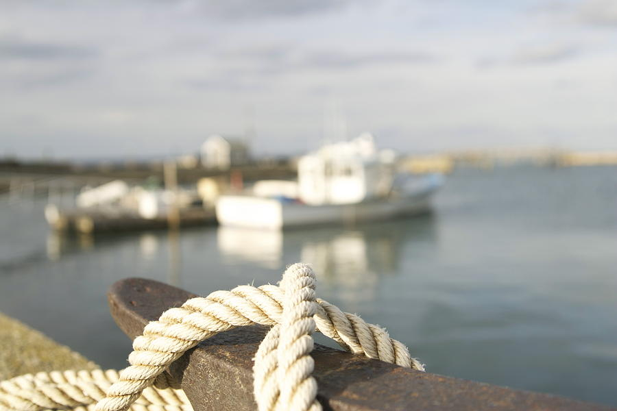 Seagulls Photograph - Knot Going Far by Eugene Bergeron
