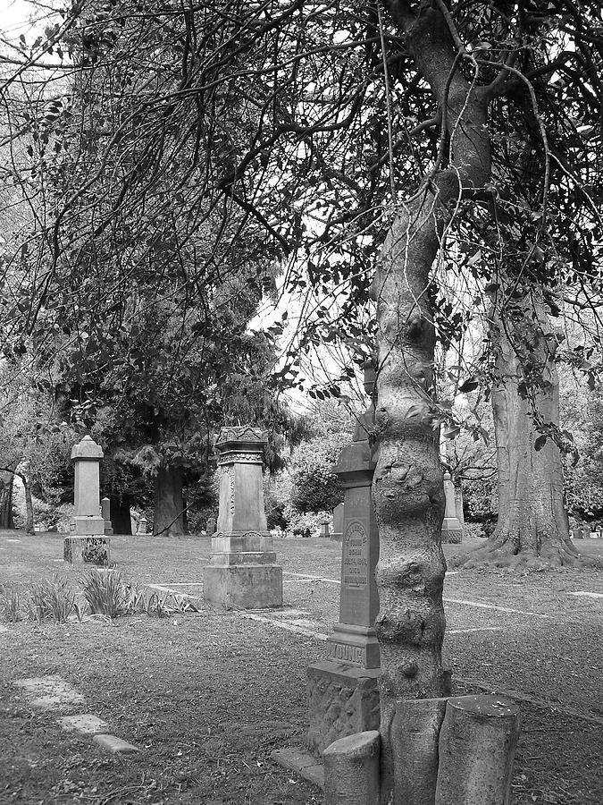Tree Photograph - Knotty Tree by Heather L Wright