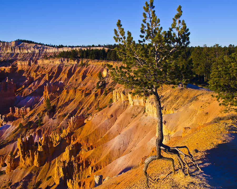 Bryce Canyon National Park Photograph - Know Your Roots - Bryce Canyon by Jon Berghoff
