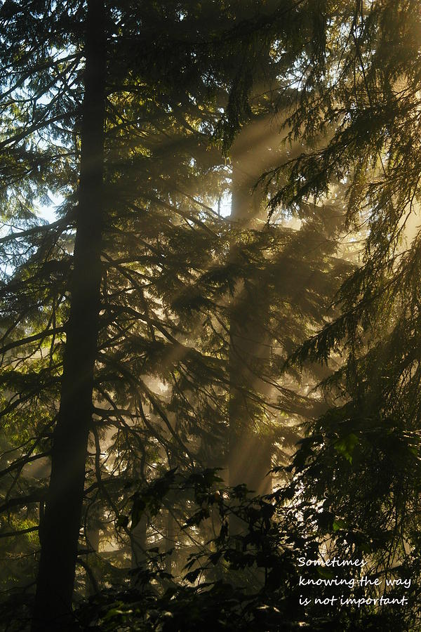 Trees Photograph - Knowing The Way by Jeff Swan