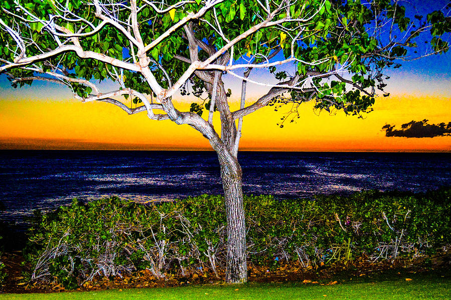Ko Olina Photograph - Ko Olina Tree In Sunset by Lisa Cortez