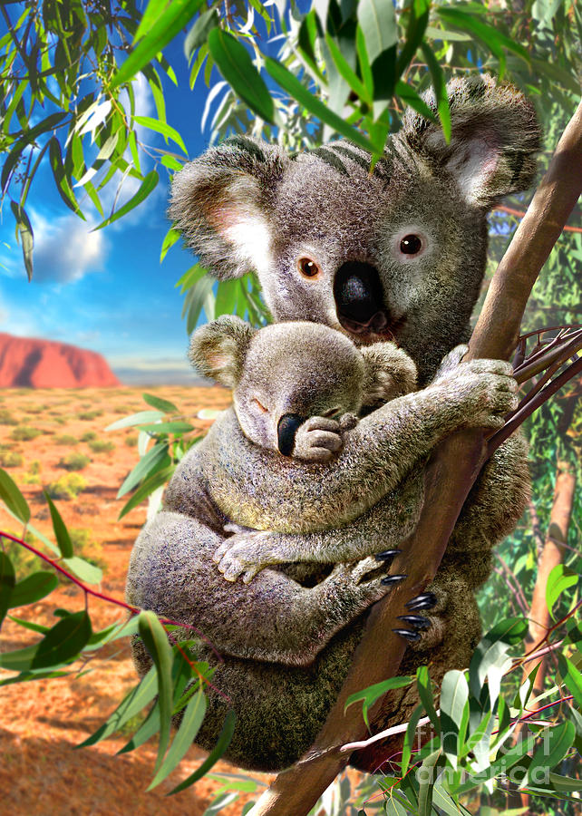 Adrian Chesterman Digital Art - Koala And Cub by Adrian Chesterman