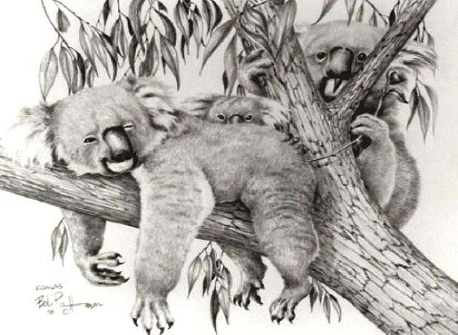 Wildlife Drawing - Koala Family by Bob Patterson