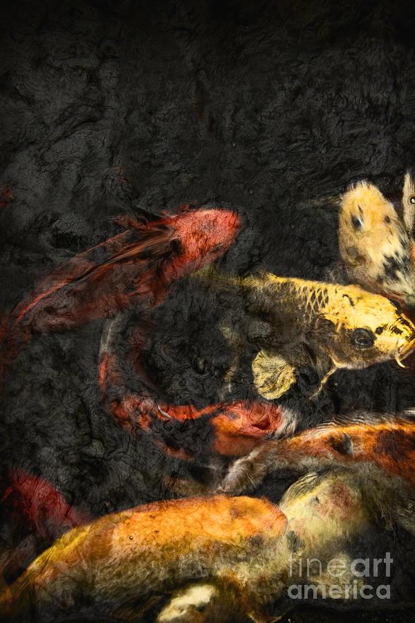 Fish Photograph - Koi Pond by Margie Hurwich