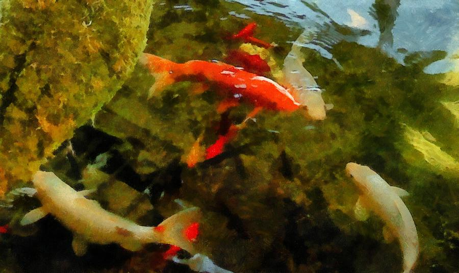 Pond Photograph - Koi Pond by Michelle Calkins