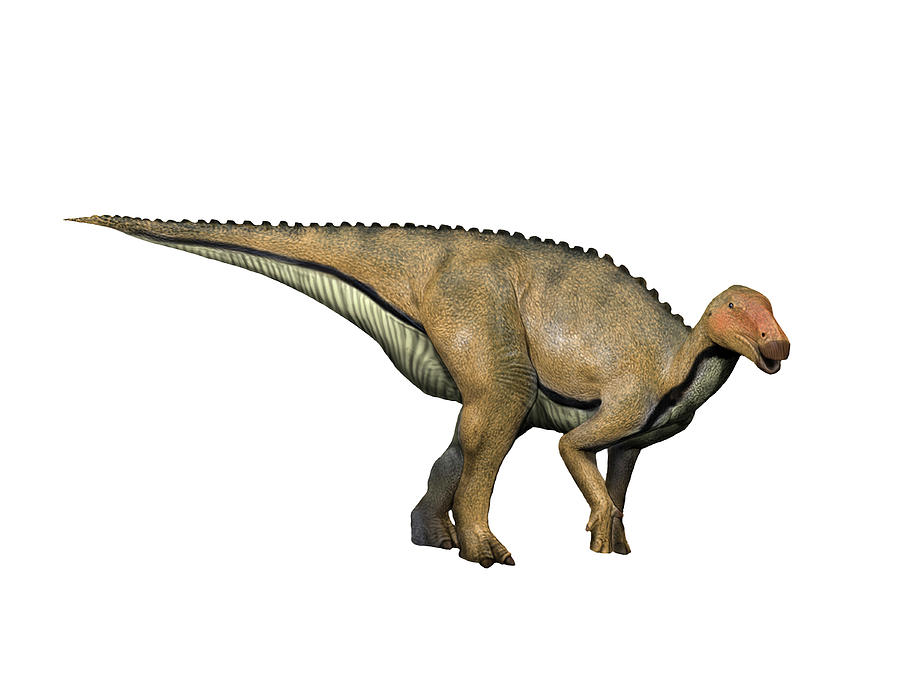 Dinosaur Photograph - Koshisaurus Is An Ornithopod by Nobumichi Tamura