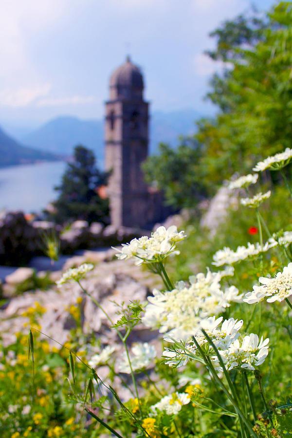Kotor Photograph - Kotor Wildflowers by Saya Studios