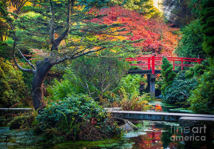 America Photograph - Kubota Gardens In Autumn by Inge Johnsson