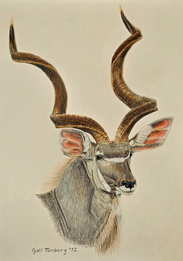 Kudu Bull Drawing By Gail Tunberg