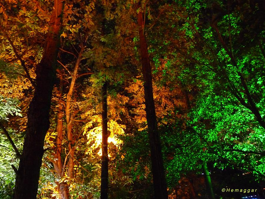 Nature Photograph - Kuming At Night by Hemu Aggarwal