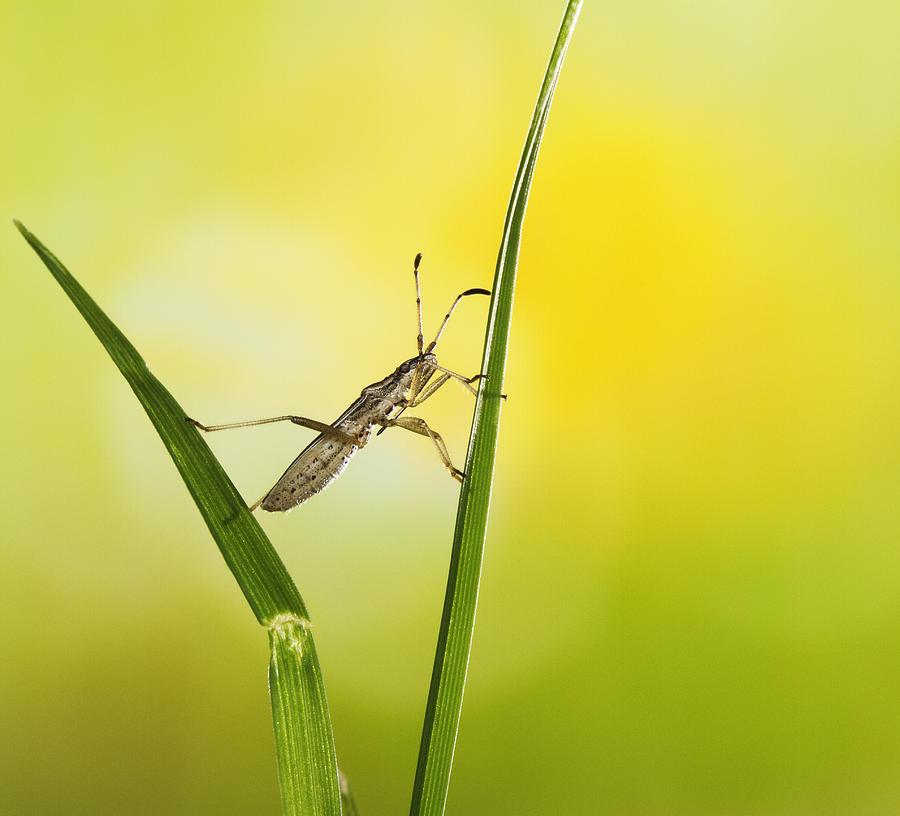 Kung Fu Bug Photograph