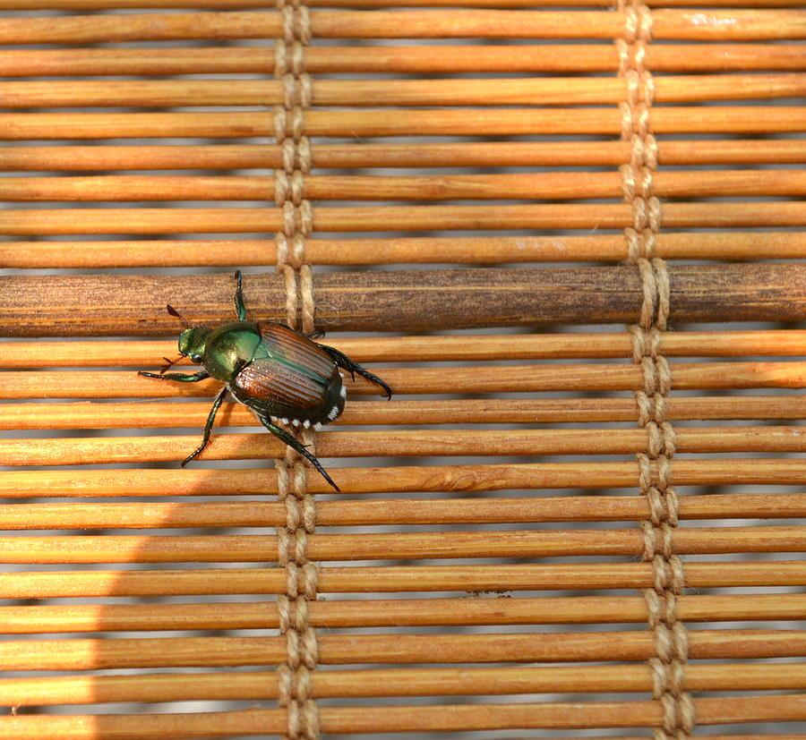 La Cucaracha The Bug Painting