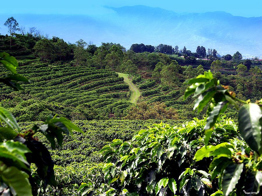 Doka Coffee Plantation Tour Costa Rica