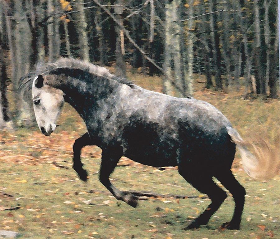Horses Photograph - La Favorita Contratercero by Patricia Keller