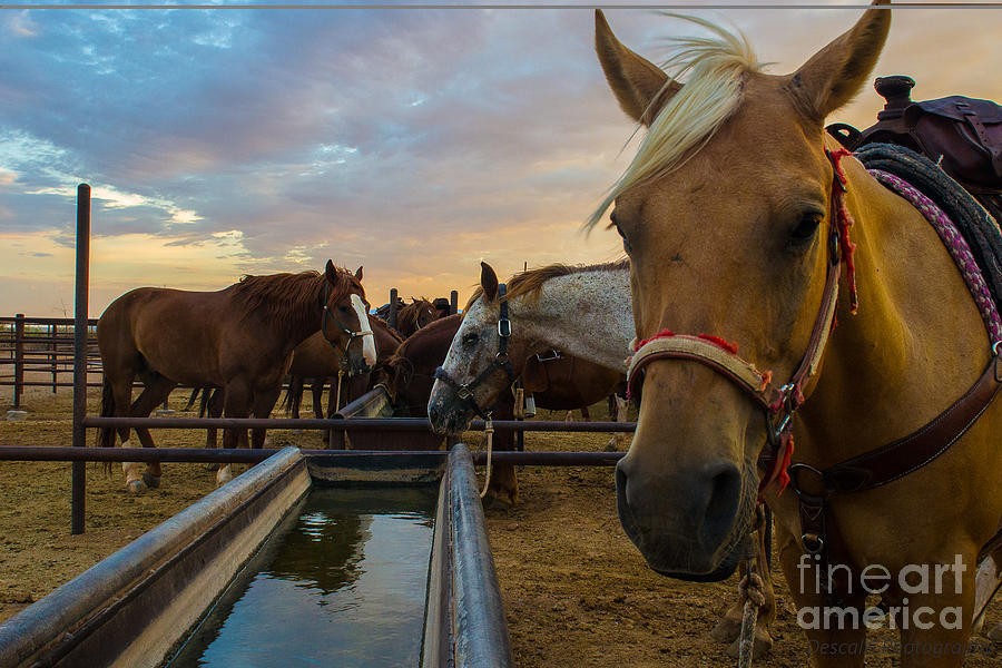 Horses Photograph - La Hermosa Dia by Patty Descalzi