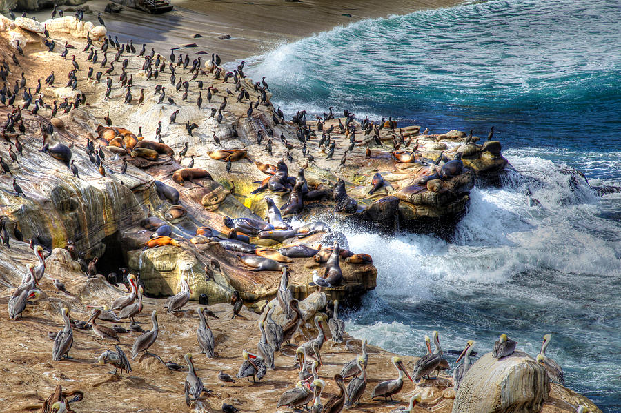 La Jolla Cove Wildlife by Dusty Wynne