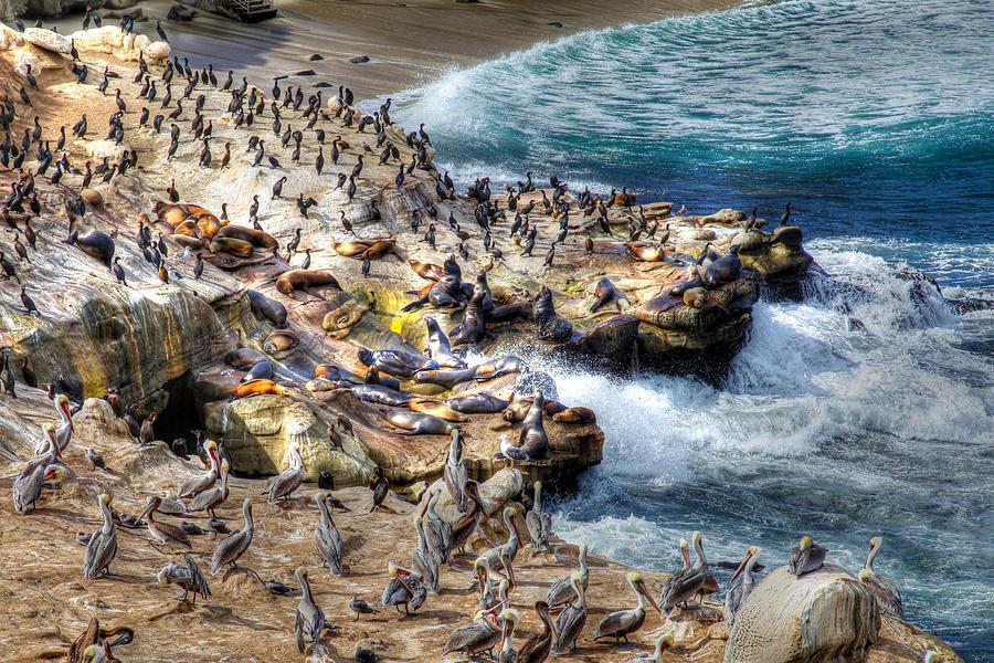La Jolla Cove Wildlife by Dusty Wynne