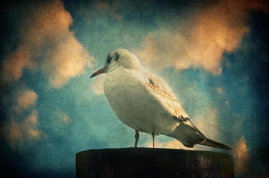 Bird Photograph - La Mouette by Taylan Apukovska