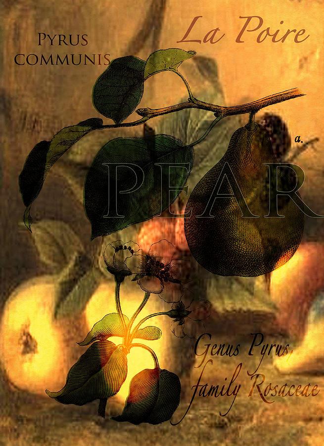 Pear Digital Art - La Poire #1 by Sarah Vernon