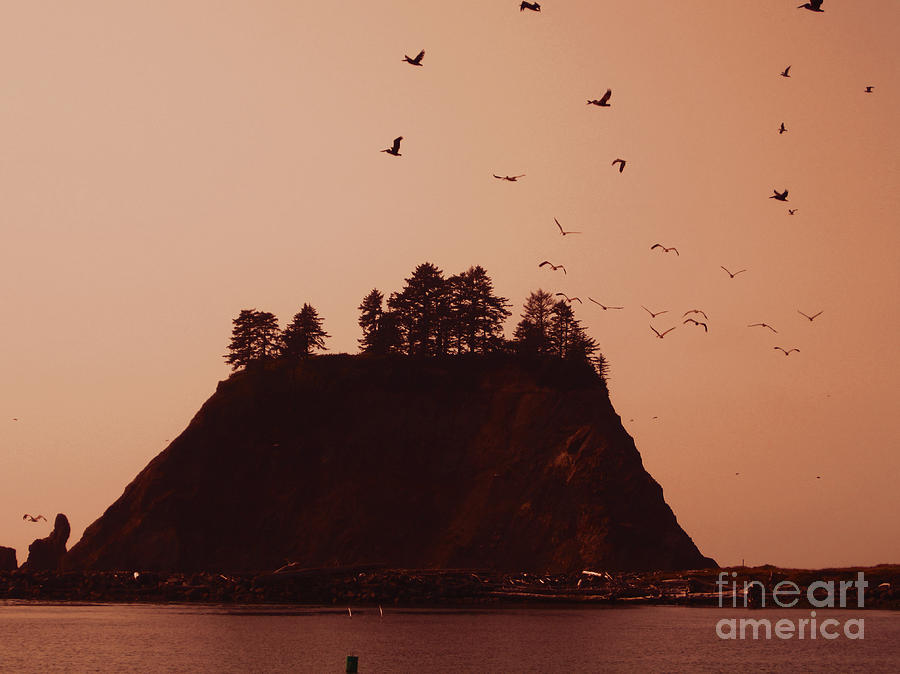 La Push Photograph - La Push Silhouette With Birds by Kym Backland