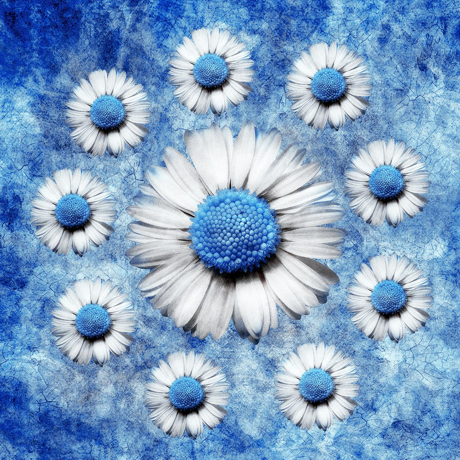 Blue Daisy Digital Art - La Ronde Des Marguerites - Blue V05 by Variance Collections