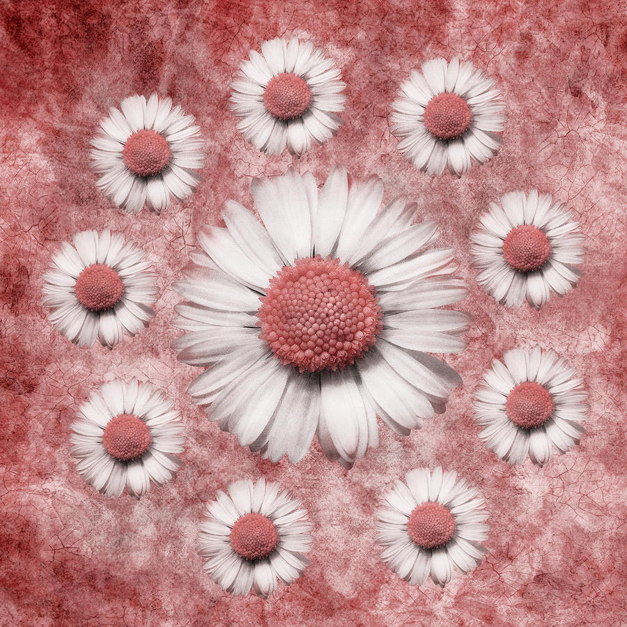 La Ronde Des Marguerites - Pink 02 Digital Art by Variance Collections