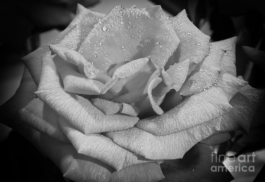 Macro Photography Photograph - La Rosa by Eyzen M Kim