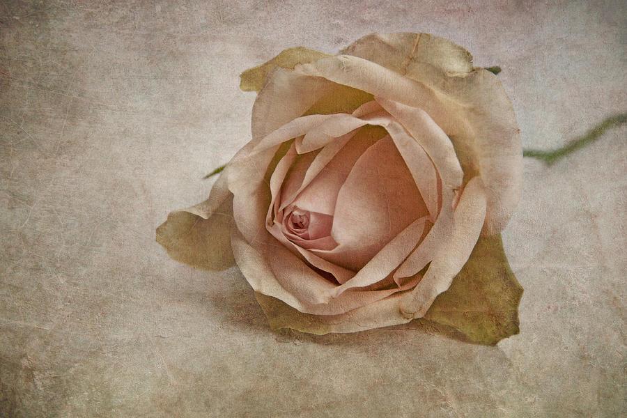 Nature Photograph - la vie en rose II by Claudia Moeckel