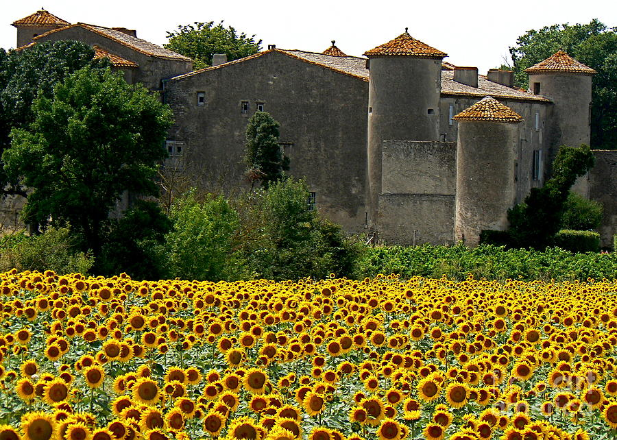 Sunflowers Photograph - La Vie Est Belle by France  Art