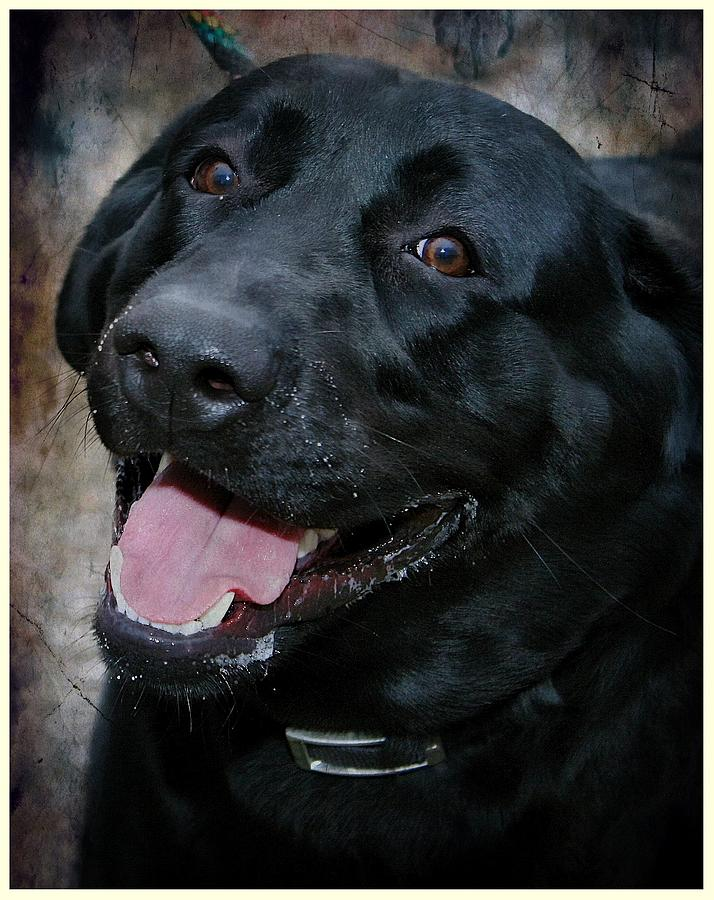Labrador Photograph - Lab Smile by Joyce Baldassarre