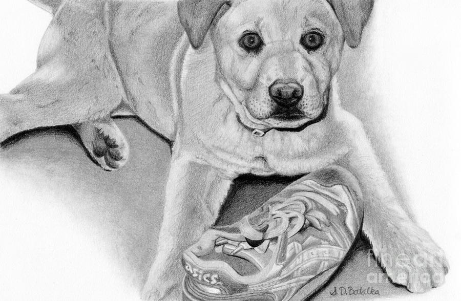 Dogs Drawing - Sneaker Snatcher- Labrador And Chow Chowx Mix by Sarah Batalka