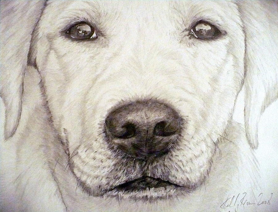 how to draw a dog labrador