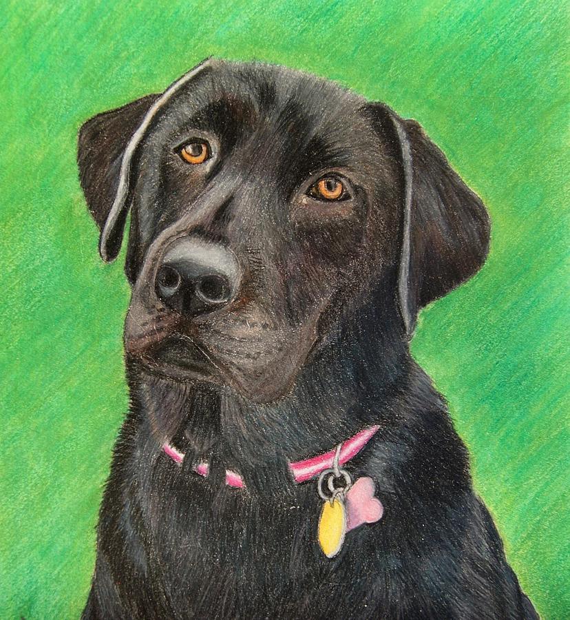 Dog Drawing - Labrador Retriever by Melanie Feltham