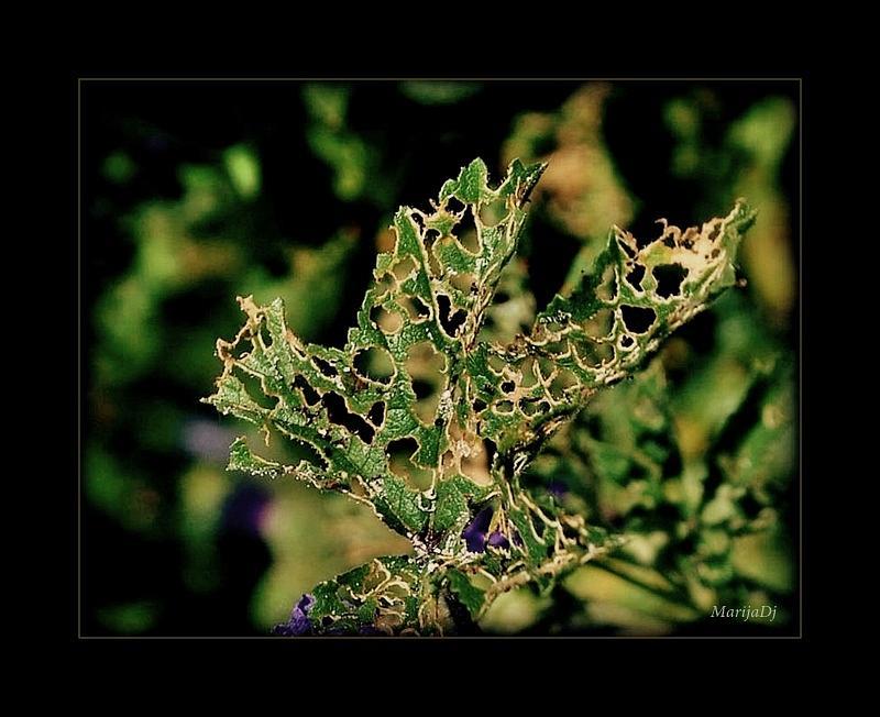 Nature Photograph - Lace by Marija Djedovic